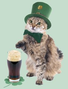 8 St. Patrick's Day Limericks as Written by Cats   Catster