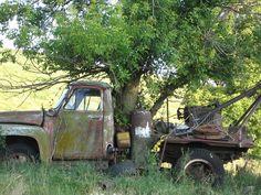 Tree growing through truck