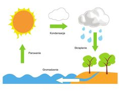 Dzień wody - Obieg Wody Dzień Wody Marzec Święta i pory roku Math For Kids, Hand Lettering, Preschool, Diagram, Teacher, Chart, Science, Projects, Professor