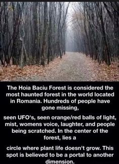 The Hoia Baciu Forest