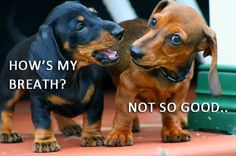 How's my breath??  Ha! We have a remedy for that - oral treatment!  www.aussiepetmobile.ca