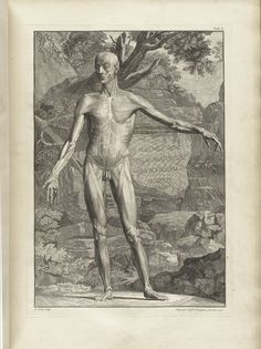 Table 1a of Bernhard Siegfried Albinus' Tabulae sceleti et musculorum corporis humani, 1749, featuring a full length frontal view of a flayed corpse in a landscape. Its left arm is extended and carved into a rock behind the corpse is Bern Siegf Albini Tabulae Anatomicae Musculorum Hominis.