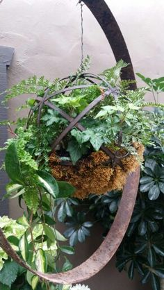 Hanging iron and moss fern ball
