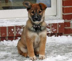 All of my favorite breeds in one! So freaking cute!! border collie, lab, german shepherd mix