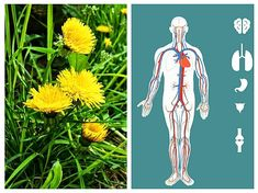 Good To Know, Natural Remedies, Health Fitness, Herbs, Medicine, Plant, Herb, Natural Home Remedies, Fitness