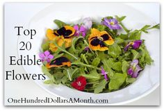 Top 20 Edible Flowers - From Garden to Kitchen | One Hundred Dollars a Month
