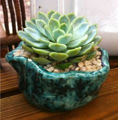 Handmade Pottery Succulent  Found it at Goodwill!!! HA!