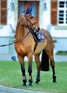 9ce19323d4b5b www.equista.pl | Schockemohle autumn winter collection 2014/2015 |  Schockemohle kolekcja jesień zima 2014/2015 | schockemoehle-sports.com |  #equestrian ...