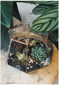 succulents in terrarium Best Terrarium Plants, Terrariums, Unusual Plants, Concept Art, Succulents, Jar, Horticulture, Nature, Gardening