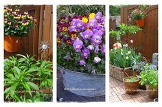 Alternative Zum Klassischen Blumenbeet: Pflanzgefäße Von Holztrog Bis  Zinkwanne