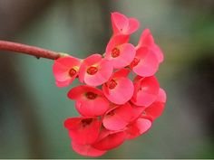 http://effyeahflowers.tumblr.com/