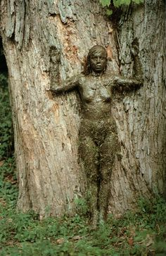 Ana Mendieta, Tree of Life Series, 1977
