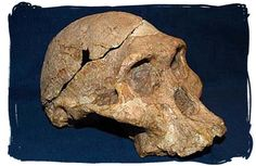 South Africa has a lot of fossils showing the evidence of human evolution.  Pictures is a skull called Mrs. Ples which is around 2.5 million years old.  It was found in the Sterkfontein caves which is close to Johannesburg.