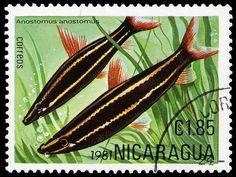 Nicaragua, 1981