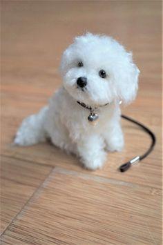 Pom Pom Animals, Felt Animals, Cute Baby Animals, Animals And Pets, Teacup Puppies, Cute Puppies, Cute Dogs, Needle Felted Animals, Needle Felting