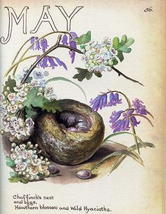 Chaffinch nest, May 1906 Morning Earth Artist/Naturalist Edith Holden Edith Holden, Antique Prints, Vintage Prints, Vintage Art, Botanical Illustration, Botanical Prints, Vintage Postcards, Vintage Images, Beltane