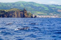 Up to a third of the world's cetaceans can be found in the waters around the Azores, including bottlenose dolphins ©James Kay / Lonely Planet