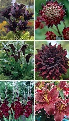 :: deep dark flower collection