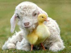 cute farm animals - Google zoeken