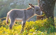 Opening up officially in 2007, the Donegal Donkey Sanctuary first came about with thanks to the kind and loving nature of Donegal couple Sandra and Danny Curran.