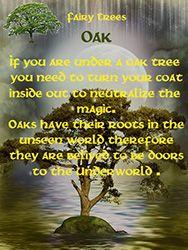Fairy Tree - Oak