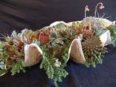 Sea shells and succulents... Photo/Designer Laura Eubanks at Design For Serenity.