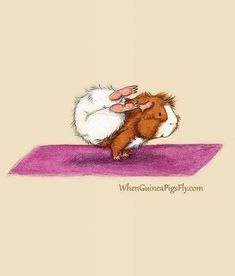 Guinea Pigs Doing Yoga, What More Can You Possibly Want? - - Guinea Pigs Doing Yoga, What More Can You Possibly Want? - World's largest collection of cat memes and other animals. Animal Drawings, Cute Drawings, Animal Illustrations, Large Animals, Cute Animals, Yoga Cartoon, Guniea Pig, Pig Drawing, Cute Guinea Pigs