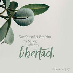 Porque el Señor es el Espíritu; y donde está el Espíritu del Señor, allí hay libertad. 2 Corintios 3:17 RVR1960