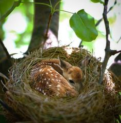 Look in the Nest!