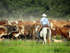 """thirtymilesout: """"Photo by Joel C. The Old Texan """" Cowboy Art, Cowboy And Cowgirl, Rodeo Rider, Cowboy Ranch, Western Photo, Marlboro Man, Cattle Drive, Cowboy Pictures, Farm Kids"""