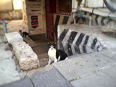 Charlie Chaplin? Tel Aviv Mustache Black and white cat