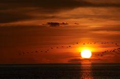 Susan Sorensen-Sunset Lower Matecumbe Islamorada, FL