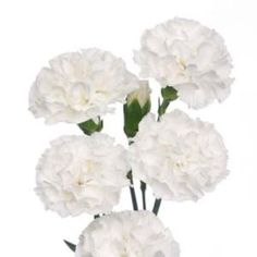 Wholesale Mini Carnations White - Blooms by the Box