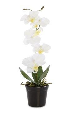 Primark - White Orchid