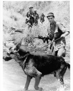 Scout dog with its handler leading a platoon.