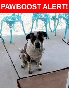 Is this your lost pet? Found in Tucson, AZ 85730. Please spread the word so we can find the owner!  Pit mix, Brown and White w/ spots. May have recently had pups.  Nearest Address: Near Gatwick Dr & E Weyburn Dr