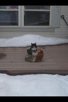 ネコのかたまり (via A friend of mine walked to his front door and found his cats like this. - Imgur)