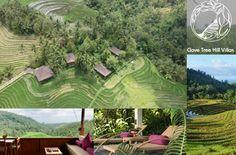 Clove Tree Hill, Hotel in Bali Bali, Terrace, Mountain Range, Indonesia, Jungles, Waterfall, Luxury, Places, Travel Destinations