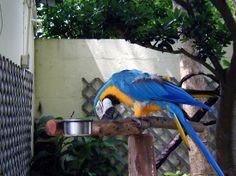 bermuda zoo and aquarium | An amazing get away - Review of Bermuda, Caribbean - TripAdvisor