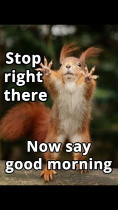 Funny Photos Funny Animal Pictures Funny Animals Squirrel – Fit for Fun Funny Shit, Funny Jokes, Hilarious, Tgif Funny, Funny Stuff, Funny Sarcasm, Funny Animal Pictures, Funny Animals, Funny Images
