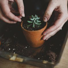 Vintage Plant Pots - Alfies Studio