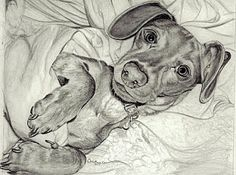 If this isn't the absolutely cutest dachshund drawing you've ever seen... lol... Okay, so I drew it. But Vienna (the sausage!!! lol) sure is adorable, all tucked into the blankets.