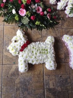 A westie for a dog lover! Flower girl , Dudley