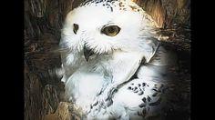 BELLA DONNA digital art - Hogwarts School (Owl Art)
