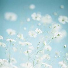 Afbeelding via We Heart It https://weheartit.com/entry/103828772/via/32289496 #cute #definitions #dreamer #dreams #enchanting #fairy #fairytale #flowers #hearts #hipster #inspo #ombre #pastels #photography #pretty #retro #spring #summer #text #vintage #wallpaper #weheartit #factoftheday #we♥️it #@samlasektwitter #@samlasekinstagram #@samlasekpinterest #eyesfilledwithlove #dailydefinition #wonderlandiheartit