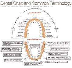 Dental terminology More