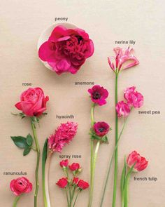 Wedding Colors: Fuchsia and Taupe | Martha Stewart Weddings
