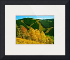 """Vail Mountain"" by Alexandra Zloto, Scottsdale, Arizona // Hiking Vail in the colorful Fall Season. // Imagekind.com -- Buy stunning fine art prints, framed prints and canvas prints directly from independent working artists and photographers."