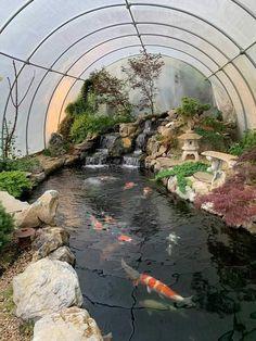 Dream Pond of Medium Investment Fish Pond Gardens, Koi Fish Pond, Fish Ponds, Pond Landscaping, Ponds Backyard, Garden Pond Design, Landscape Design, Greenhouse Gardening, Water Garden