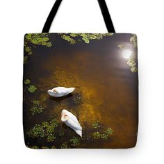 """Two swans with sun reflection on shallow water Tote Bag 18"""" x 18"""". This has been a real challenge to take this photo of these swans as I had to find a high point to shoot downwards. Look carefully and you can see the fish swimming."""